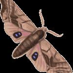 moth-36585_640